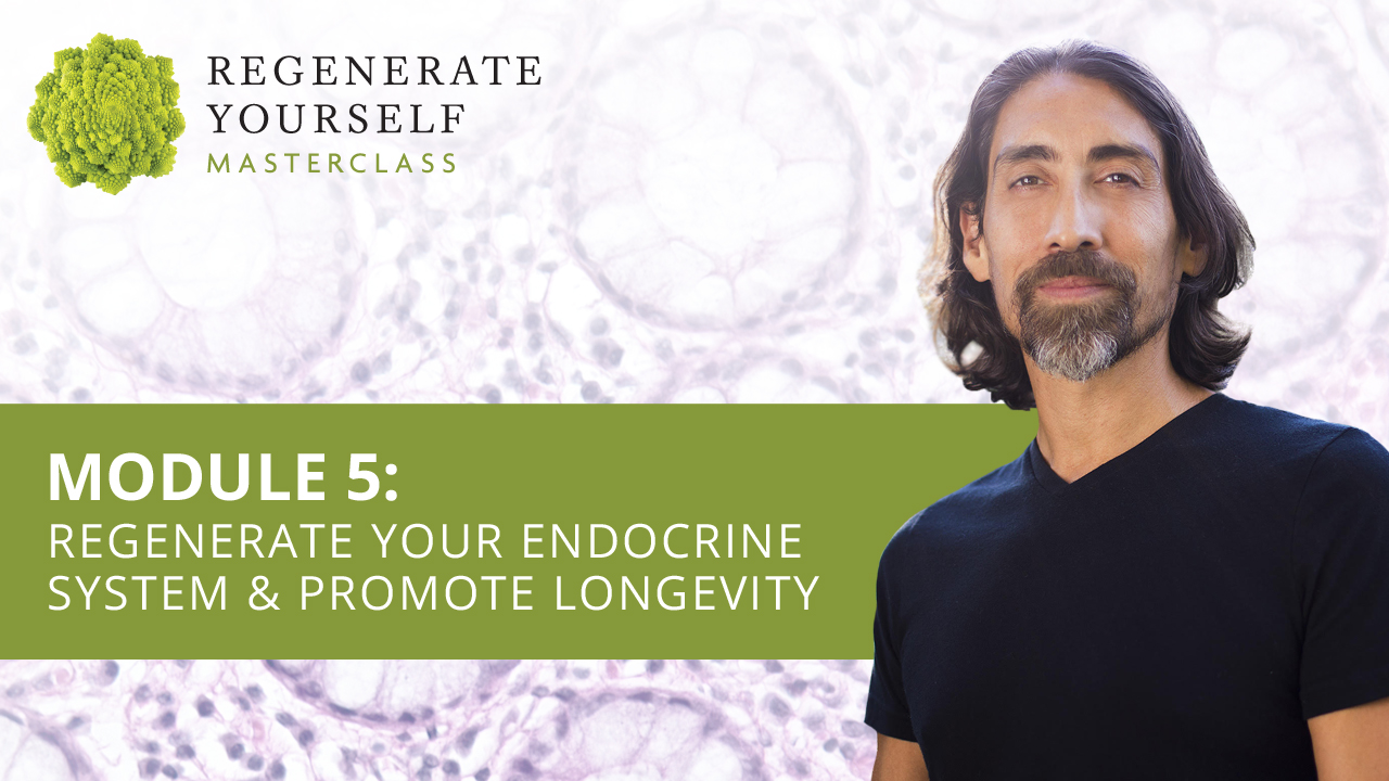 : Regenerate Your Endocrine System & Promote Longevity
